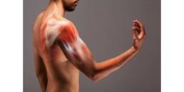 Anatomy of a man's arm. bicep tendon tear concept